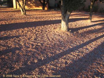 treetrunkshadows0806.jpg