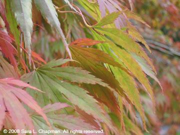 autumnlvs1764.jpg
