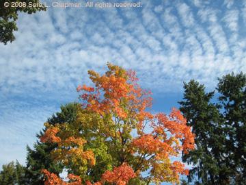 treesky1672.jpg