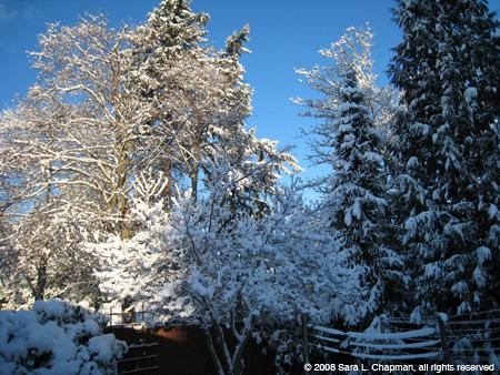 snowindmyard0608.jpg