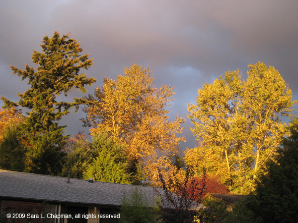 autumntrees6355.jpg