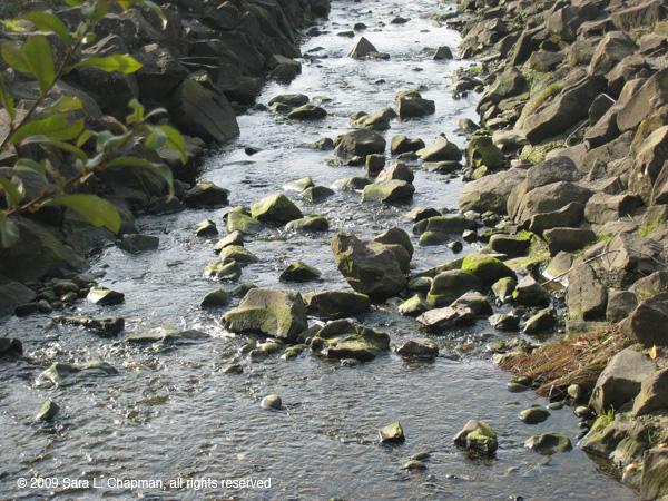 creek6438.jpg