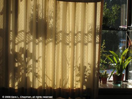 curtainshadow3628.jpg