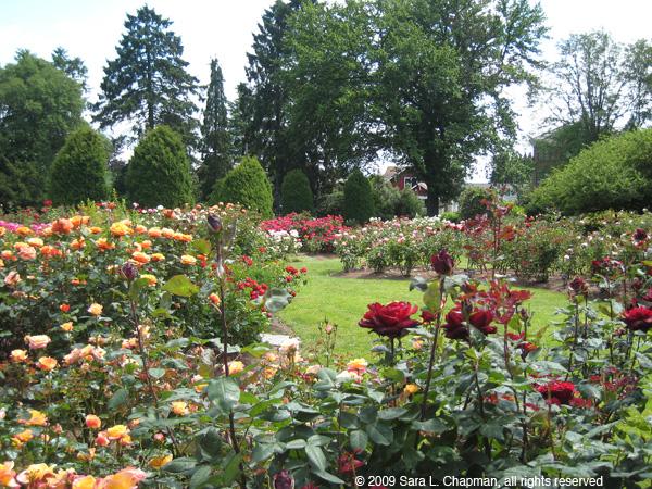 rosegarden3988.jpg