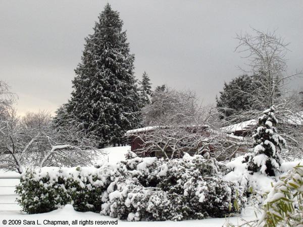 snowscene3953.jpg