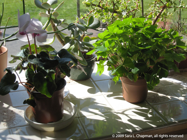 plants5092