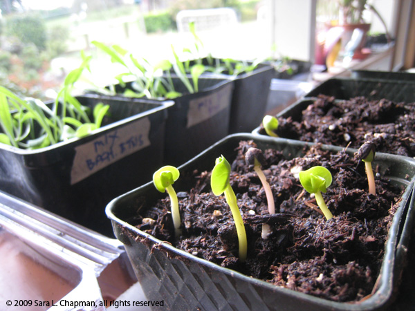seedlings51681