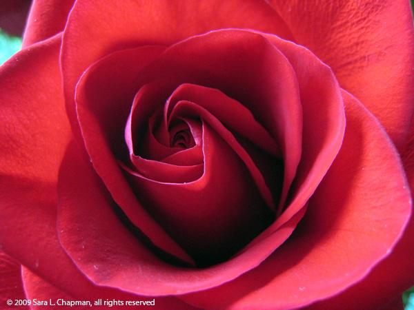 rose_red1789