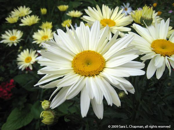 daisy2658
