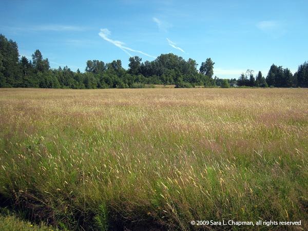 field2315
