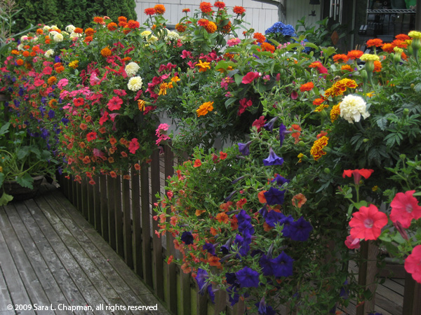 cindysdeckflowers4311
