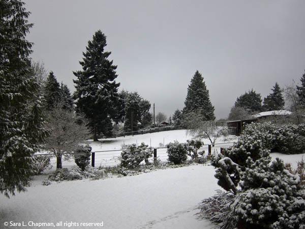 winter, monochrome, snow, trees, scenic, evergreens