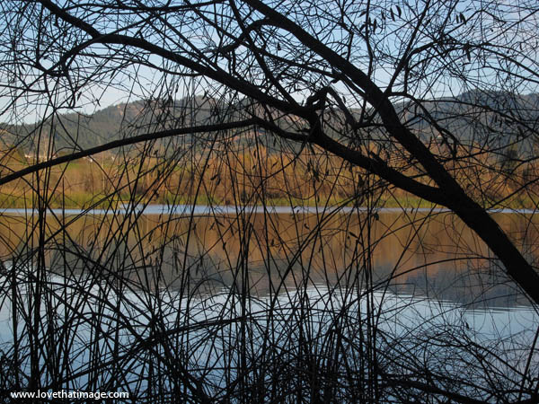 reflections, winter, silhouetted branches, lake, bare trees, ripples, glassy