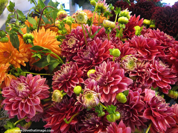 red dahlias, dahlia buds, orange dahlias, dahlia bouquets, masses of dahlias, Pike Place Market flowers