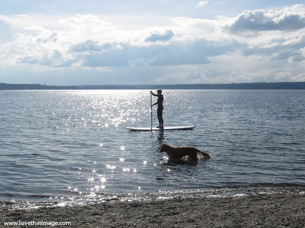 long board, swimming dog, paddling, scenic, Puget Sound, wet suit
