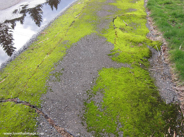 mossy, puddle, reflection, road, verge, roadside, lawn, moss
