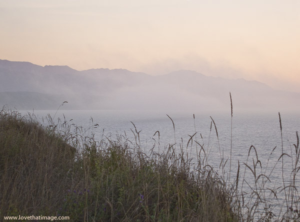 sunset, fog, grasses, mist, dusk, puget sound