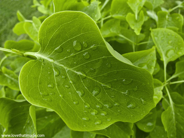 rain, raindrops, macro, veins, water, droplets, curves, nature, lilac leaf