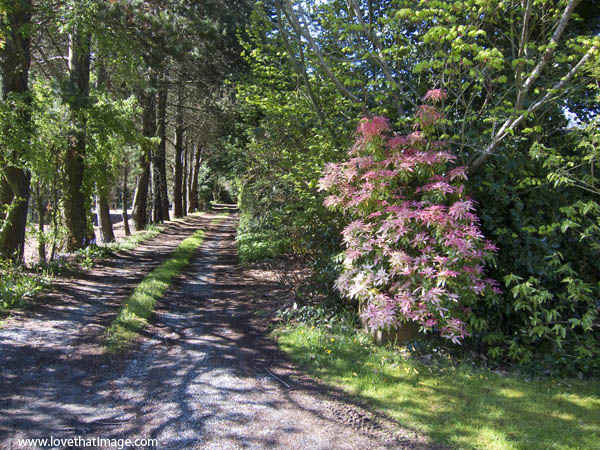 path, dirt road, andromeda, pink, shadows, rural, trees, springtime