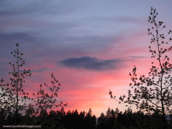 silhouette, tree branches, sky, dusk, sunset, trees, pink and blue