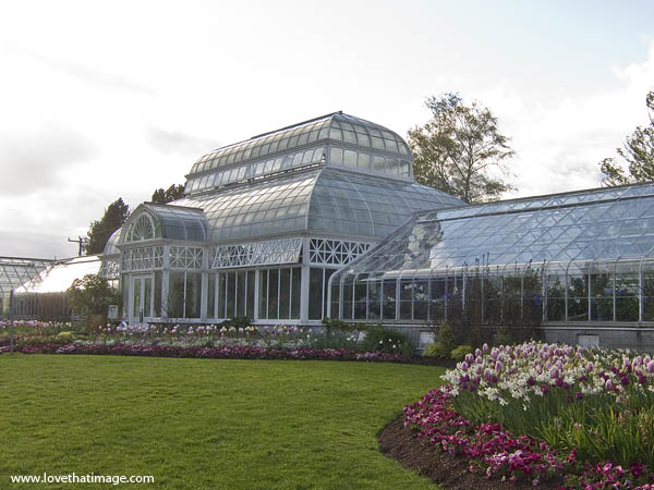 Seattle, Volunteer Park Conservatory, spring tulips, scenic, glass house, victorian greenhouse, crystal palace