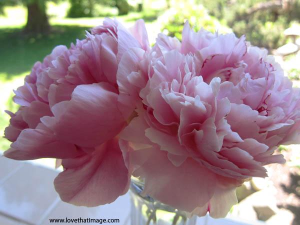 pink peonies, macro, close up, ruffled petals, light pink peonies in a vase