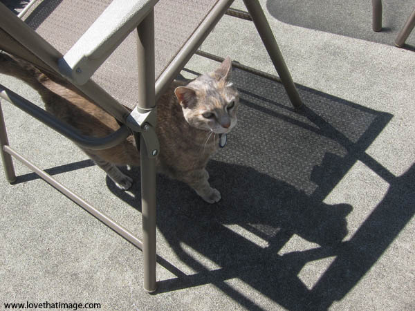 cat, gray cat, chair shadows, sunshine, patio