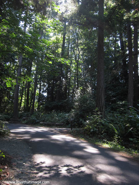 dappled sunlight, forest path, forest shadows, pacific northwest woods