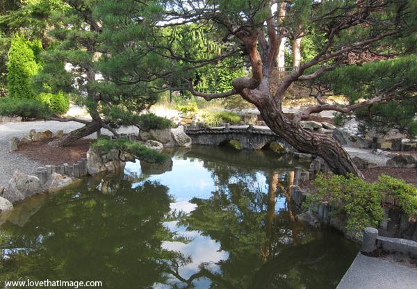 highline japanese garden, water reflections, japanese black pine tree