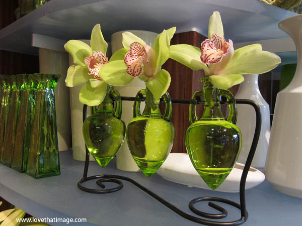 Three Orchids In Three Vases Saras Fave Photo Blog