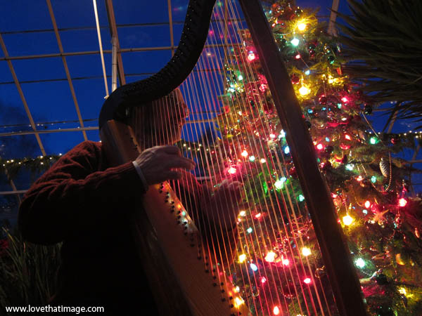 harp player with christmas lights