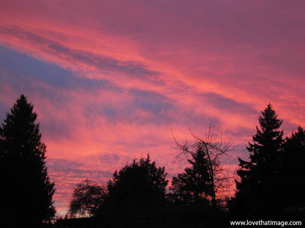 pink sunset with silhouette trees, fiery sunset
