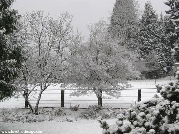 snow covered trees, tree branches, winter scene, snow scene, garden snow landscape