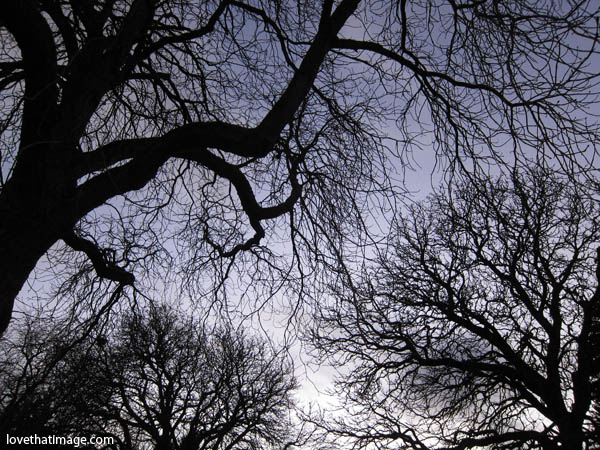 bare tree branches silhouetted against the winter sky at dusk