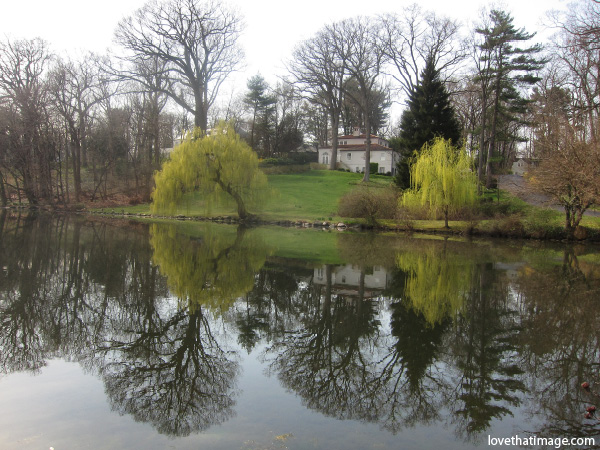 willow trees reflected in glassy pond, bare tree branches, springtime