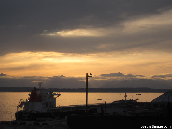 seagull, silhouette, sunset, clouds, puget sound, boad, dusk