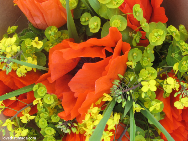 shirley poppies, orange poppies, big poppies with black centers, euphorbia flowers, yellow flowers, bouquet, farmers market flowers