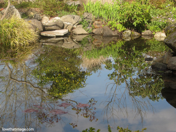highline botanical garden pond, garden pond reflections, sky and trees reflected in water