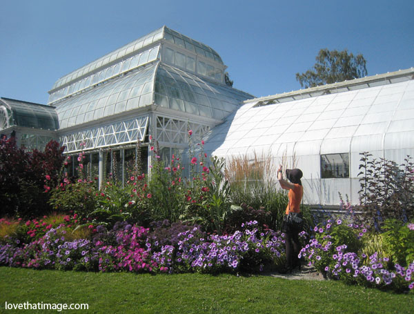 volunteer park conservatory, glass palace, seattle, celebration, flowers