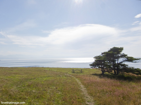fort ebey, ft ebey, open field, picnic table, single tree, path to the water, big puffy cloud, parasailing, paragliding