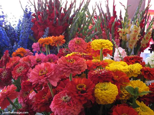 zinnias, glads, gladiolus, bouquets, seattle, pike place market, flowers, massed floral display