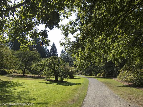 road, path, trees, shadows, sunshine, seattle, arboretum