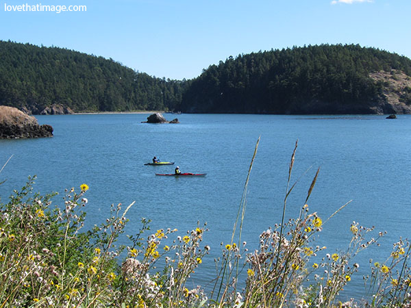 wildflowers, evergreens, kayaks, bowman bay, wa, washington, deception pass, rocks