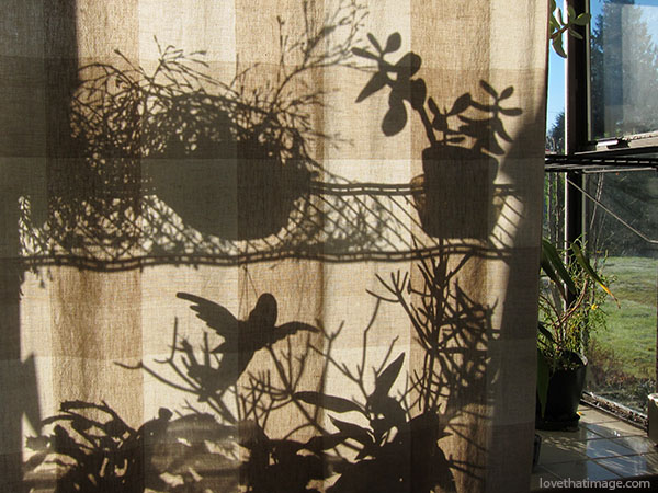 silhouettes, plants, houseplants, curtain, beige, sunny day