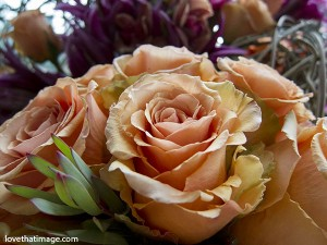 peach roses, apricot roses, rose bouquet, perfection, macro
