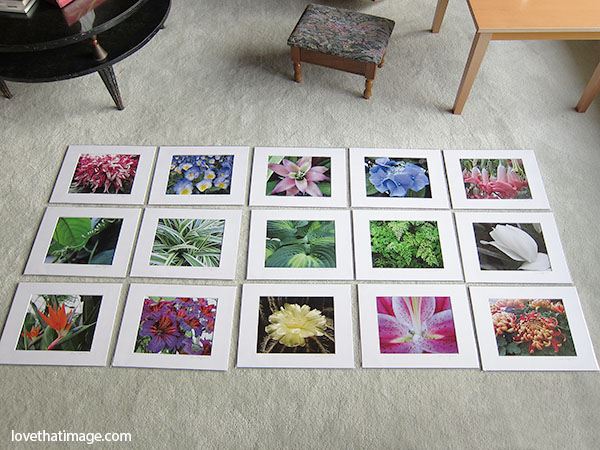 "Matted photo prints from ""Flowers of Volunteer Park Conservatory"""