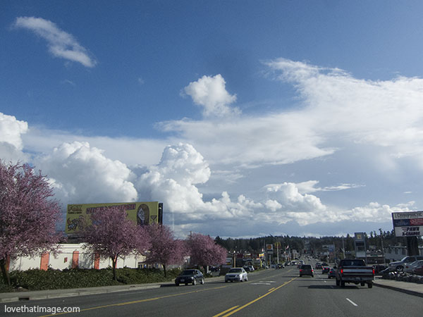 Spring scene with cherry trees and clouds in Burien, Washington.
