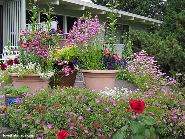 Colorful flowers bloom in pots and around a Seattle patio in late June