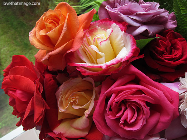 Many colors in a rose bouquet, with a Double Delight in the middle, the yellow with magenta edges