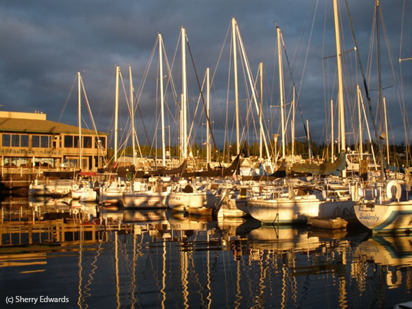 Sailboats at a marina reflected in golden afternoon light